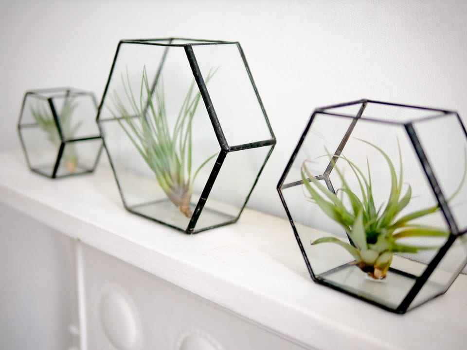 monti glass vases air plants