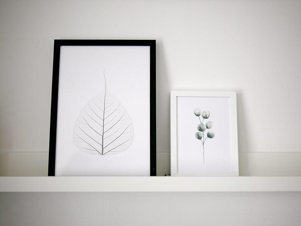 botanical art prints
