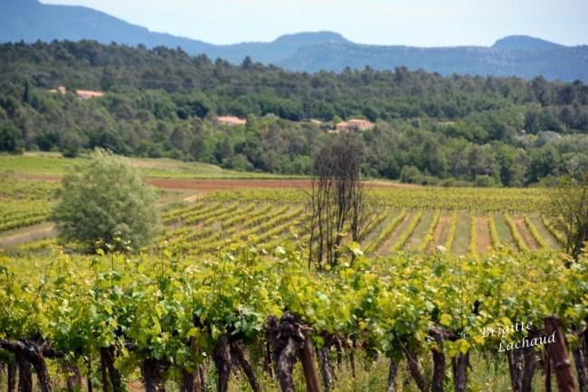 Art et vin St Hilaire 270514 140