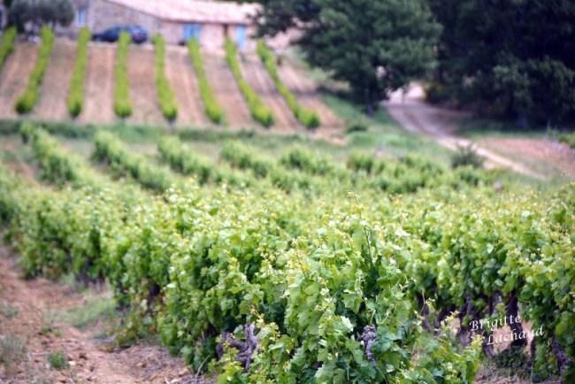 Art et vin St Hilaire 270514 142
