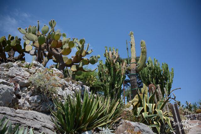 Ezr jardin botanique 210714 BL 031