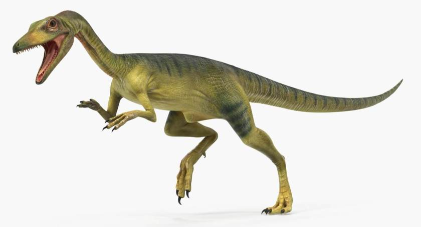 Dinosaur names -Compsognathus