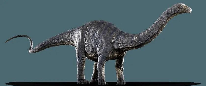 Dinosaur Names - Apatosaurus