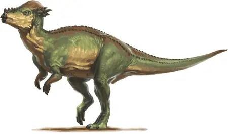 Dinosaur names - Stegoceras