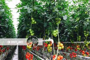 Visite d'une écosserre qui fait le plein de tomates @ Ecoserre Les Paysans de Rougeline | Lapouyade | Nouvelle-Aquitaine | France