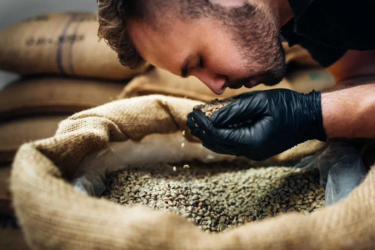 worker sniffing a fistful of fresh raw beans from burlap bag