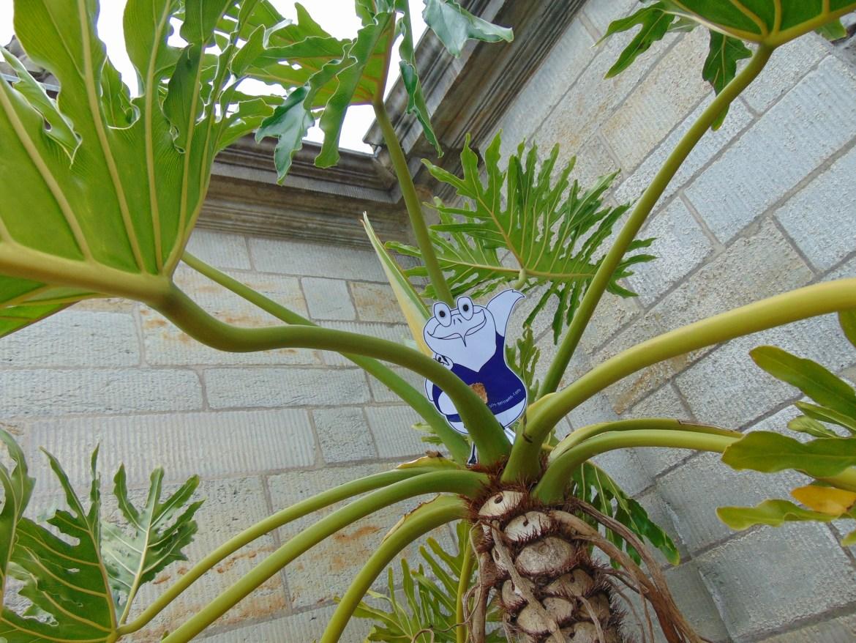 Auf Palmen fühle ich mich besonders wohl... erinnert mich irgendwie an meine Heimat Jamaika.