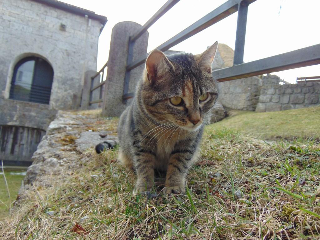 Katze auf der Festung Kufstein