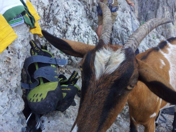 Ziegen in Griechenland