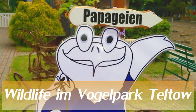 Oddys Wildlife – Vogelpark Teltow