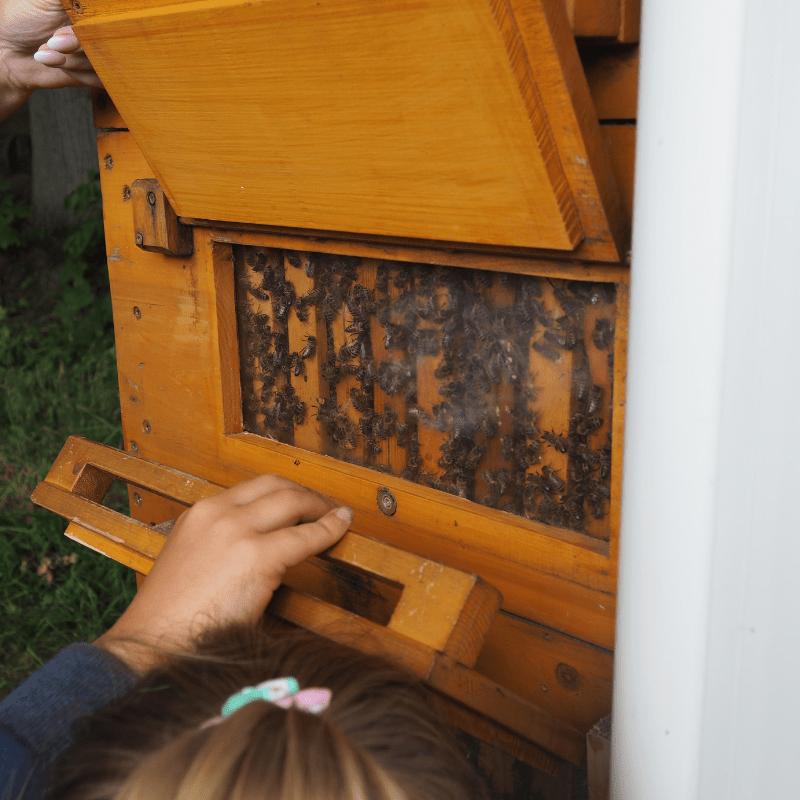 wildpark altenberg bienen