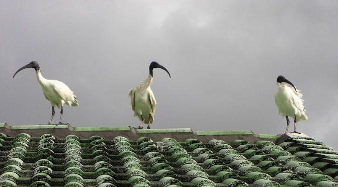 amiante sur les toits