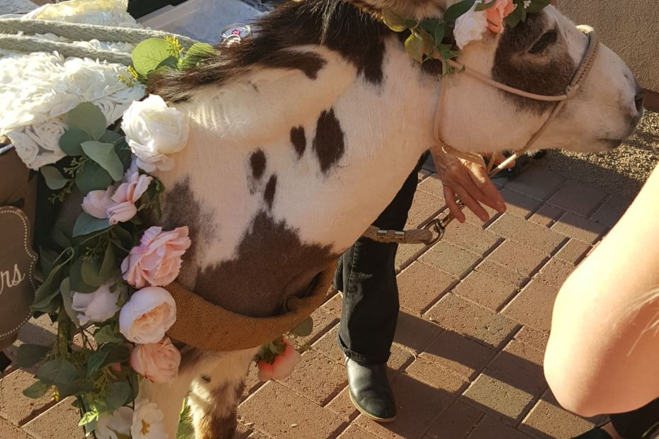 SoSco Duo played wedding ceremony at a wedding with a Beer Burro in Scottsdale