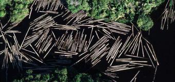 Declaração de Organizações da Sociedade Civil sobre a Crise do Desmatamento e Queimadas na Amazônia Brasileira