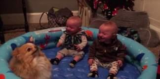Tvillingene ser en pomeranian for første gang. Reaksjonen? Hysterisk!