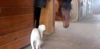 hund og hest
