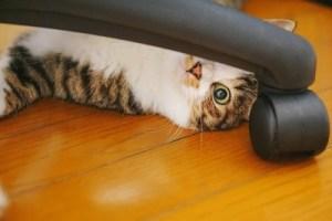 写真素材:猫2