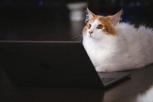 写真素材:猫:PC