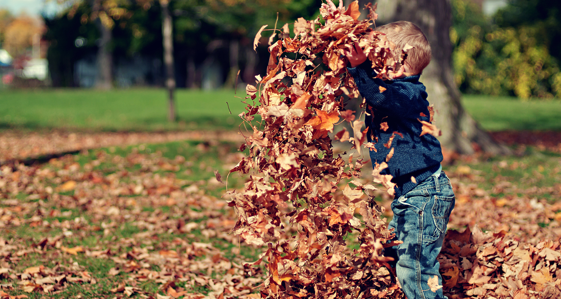 Boy playiing in leaves in fall