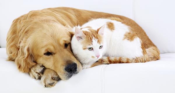 Chat et chien réconciliés