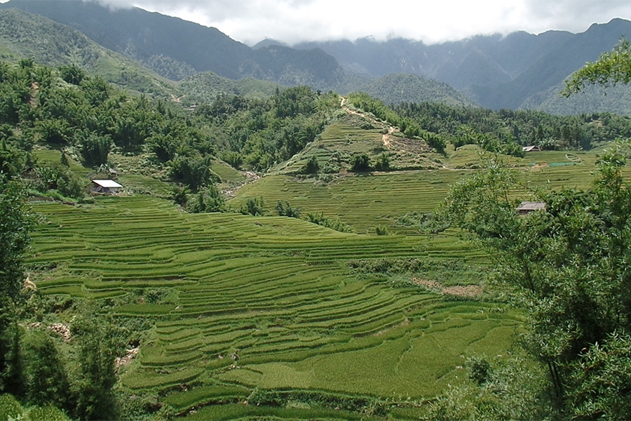 Sapa rice terraces in Vietnam