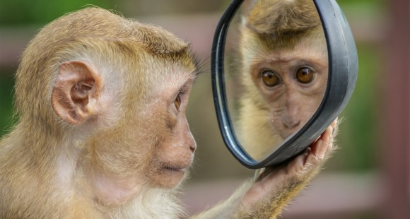 Monkey looking in mirror. Feedback!
