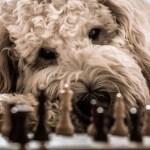 Ajeduca: Beneficios del ajedrez