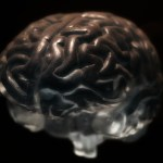 ScolarTIC: Neurodidáctica