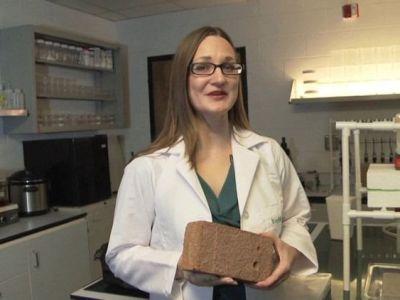 Innovación: se crea un ladrillo de cemento biológico mediante bacterias