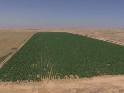 """Israel: """"Tenemos la tecnología para revivir los desiertos en todo el mundo"""""""