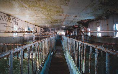 Come l'industria della carne nasconde il proprio impatto