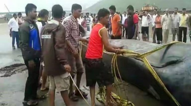 Blue whale dies after being stranded on land for ten long hours