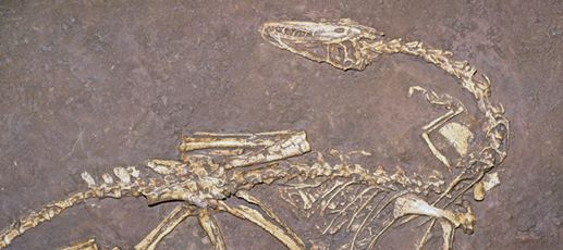 Triassic Fossils: Paleontologists Find Fossils That Explain Dinosaurs' Growth Patterns
