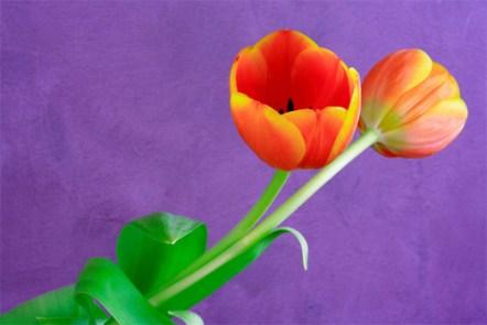 vibrant-colors