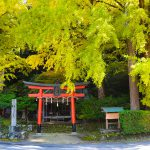 "Yellow leaves spot of off the beaten path you want to take a friend who came to Kyoto tourism ""Iwato deciduous shrine"""