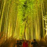 Start bamboo forest of light up there is fantastic Kyoto Arashiyama Hanatoro 2016
