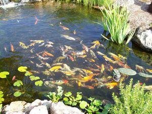 Ribnjak ribe: mali pregled Koje su prednosti takve ribe?
