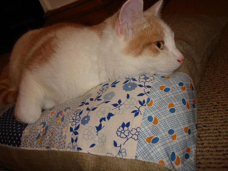 Cat_cushion