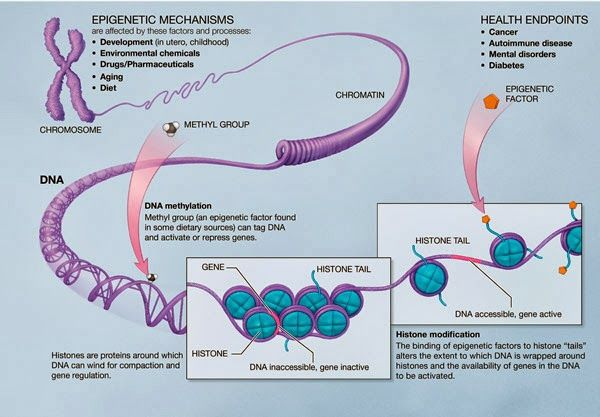 Chromosome Vs Chromatin 10 Health Tips For Anyone With A Mthfr Gene Mutation