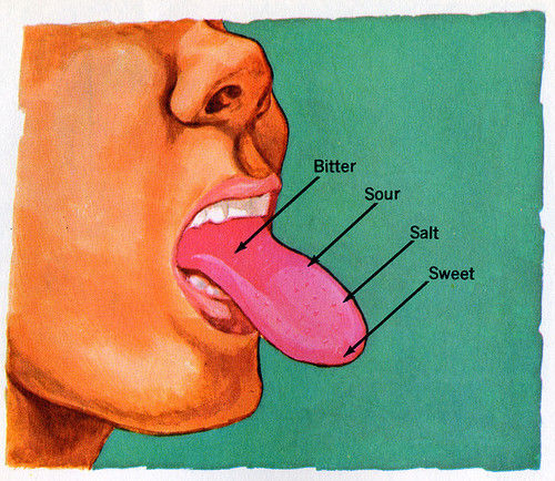 health tongue diagram bmw e36 wiring the taste bud map you learned in school is wrong -- tastes are perceived all over ...