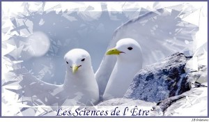 Sciences-de-letre