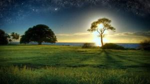 sagesse-Nature