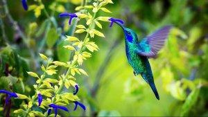 Oiseau-dans-la-nature