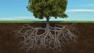 Les-racines-de-vos-souffrances