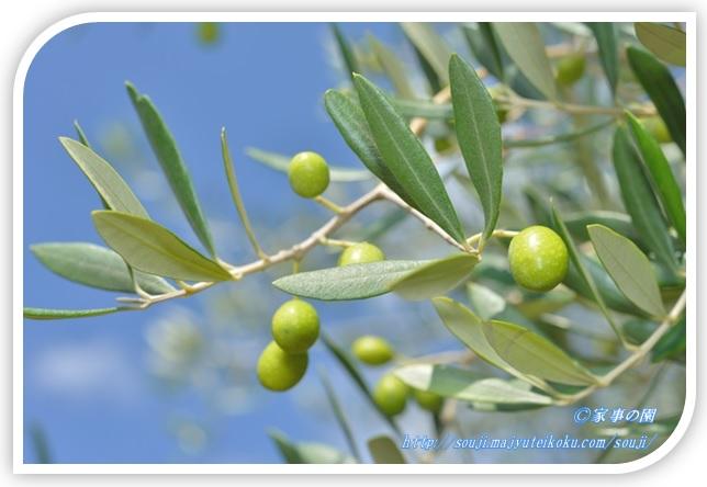 オリーブとオリーブの葉