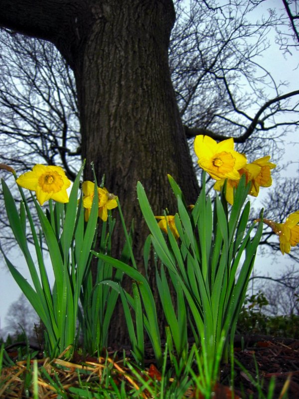 Soul Amp Daffodils In Wisconsin Sign Of