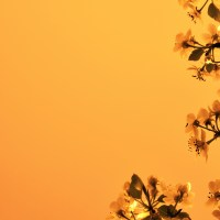 Orange background bloom tree