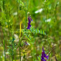"<span itemprop=""name"">Two purple flowers</span>"