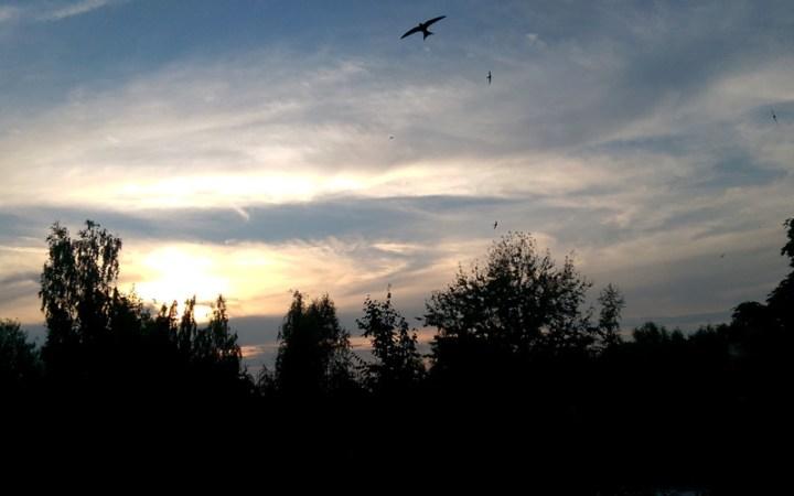 Abendstimmung am Heimat-Himmel: Mauersegler-Schwarme toben fröhlich vor dem stimmungsvollen Sonneuntergang