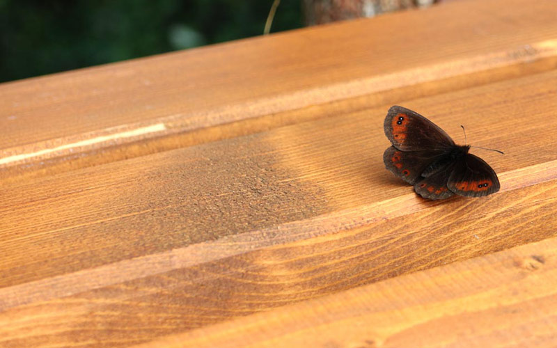 Mirabell Dolomiten Wellness Residenz folge ich dem Schmetterling in mir